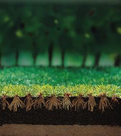 Compo - floranid gazon meststof met isodur technologie