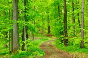 Elf nieuwe bebossingsprojecten in Vlaanderen